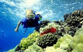 snorkeling di sekitar Lagoon