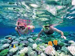 Trumbu karang yang indah