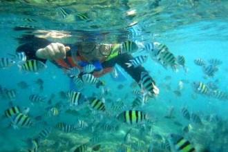 Indahnya terumbu karang dan ikan-ikan di sekitar lokasi